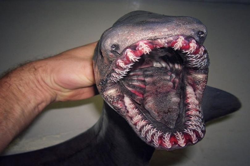 Scary looking deep sea fish
